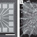 Scientists develop atomic-scale hardware to implement natural computing